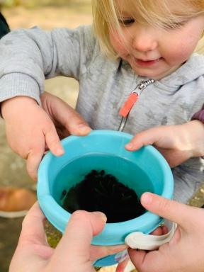 Kaulquappen, Frösche, Natur, Natur entdecken, Ausflüge mit Kindern,