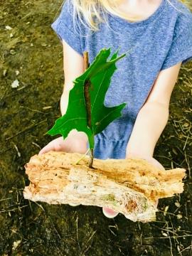 Natur, Natur entdecken, Ausflüge mit Kindern, basteln, Naturmaterial