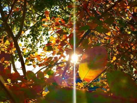 Herbst, Oktober, unterwegs mit Kindern, Freizeittipps, Events, Familienzeit, Lüneburger Heide