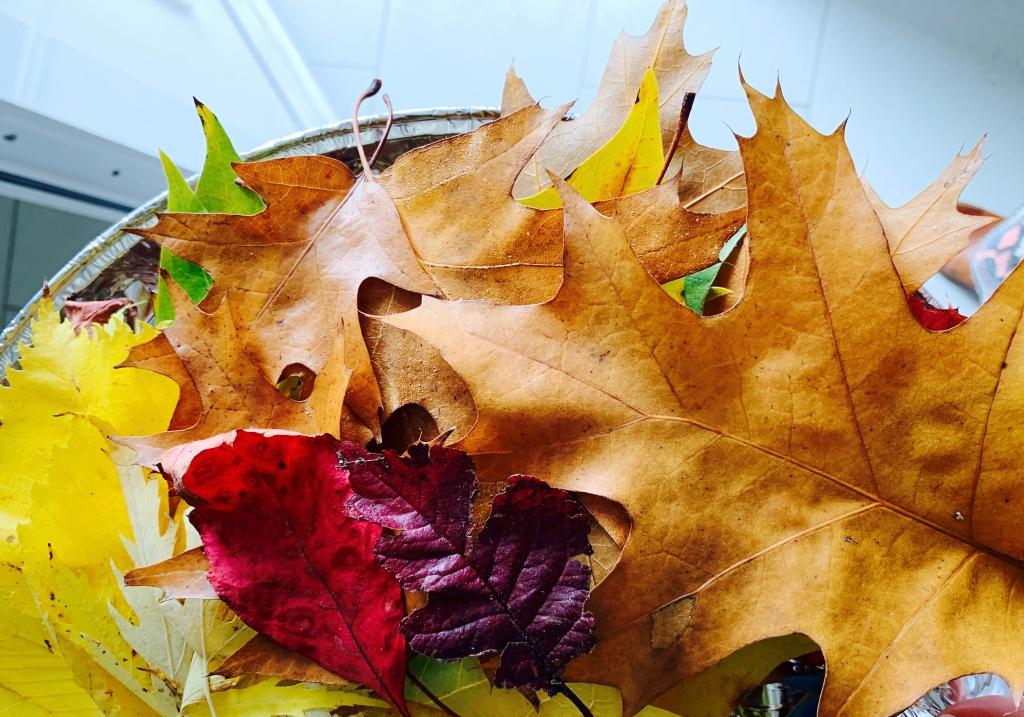 Herbstferien in Lüneburg, Familienleben in Lüneburg, Lüneburger Heide, Ausflugstipps, Basteltipps, Ferienprogramm, Bucketlist Herbst,